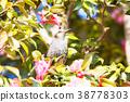 鳥兒 鳥 野生鳥類 38778303