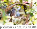 鳥兒 鳥 野生鳥類 38778304