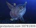 鱼 蓝色的海洋 戴水肺潜水 38781806