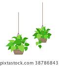 관엽 식물의 일러스트. 38786843