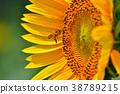 向日葵 蜜蜂 夏天 38789215