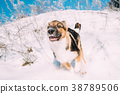 Puppy Of Mixed Breed Dog Playing In Snowy Forest 38789506