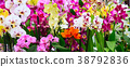 Variety of many different orchid flowers banner 38792836