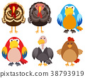 Turkeys and different types of birds 38793919