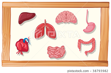Human organs in wooden frame 38793982
