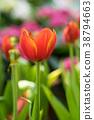 Red tulips in the garden 38794663