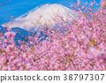 Kawazu櫻花盛開和富士山 38797307