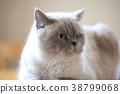 Cat 38799068