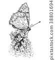 butterfly flower illustration 38801694