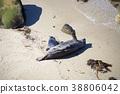 海岸 海滨 沙滩 38806042