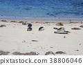 密封牧群在拉霍亞海岸的在聖地亞哥,加利福尼亞,美國 38806046