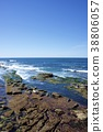 密封牧群在拉霍亞海岸的在聖地亞哥,加利福尼亞,美國 38806057