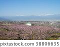 peach, flower, field 38806635
