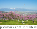 peach, flower, field 38806639