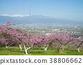 peach, flower, field 38806662