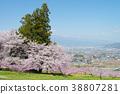 peach, flower, field 38807281