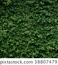 Beautiful Green leaf wall and background 38807479