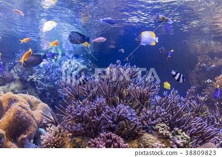 珊瑚和熱帶魚 38809823