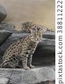猫 猫咪 小猫 38811222