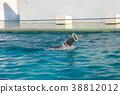 Sea lion show, Shinagawa aquarium 38812012
