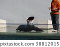 การแสดงของสิงโตทะเล, พิพิธภัณฑ์สัตว์น้ำชินางาวะ 38812015