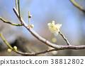 매화의 꽃 38812802