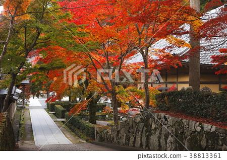 eigen-ji, the rinzai sect, maple 38813361