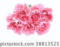 카네이션, 꽃, 플라워 38813525