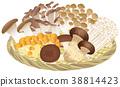 원숭이 모듬 (버섯) 38814423