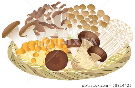 mushroom, mushrooms, (bamboo) colander 38814423