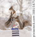 red squirrels with an traffic light and crosswalk 38815875