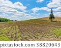 풍경, 경치, 나무 38820643