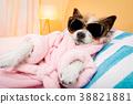 animal, bathrobe, dog 38821881