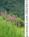 ดอกไม้ฤดูร้อนนกกระจิบ 38826623