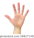 Realistic 3D Silhouette of an open hand on White 38827148
