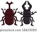 甲蟲雄鹿甲蟲 38829080