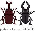甲蟲雄鹿甲蟲 38829081
