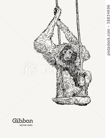 Gibbon monkey sketch vector graphic  drawing. 38834696