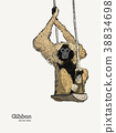 Gibbon monkey sketch vector graphic  drawing. 38834698