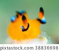 海参 海中珍宝鱼 水生的 38836698