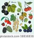Berries icons set 38836836