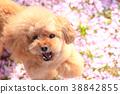 這是一個花瓣地毯♪ 38842855