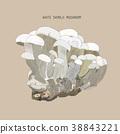 Vector illustration sketch - mushrooms. Shimeji. 38843221