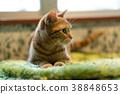 毛孩 貓 貓咪 38848653