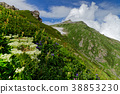 시로우마타케, 산, 꽃 38853230