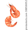 Two shrimps isolated on the white background 38856052