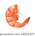 Single orange shrimp painted in watercolor 38856307