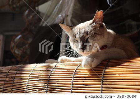 一隻貓 38870084