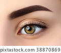 Close up view of beautiful brown female eye 38870869