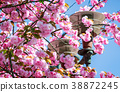 gorgeous sakura flowers on a blue sky background 38872245